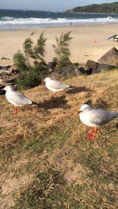 seagull byron